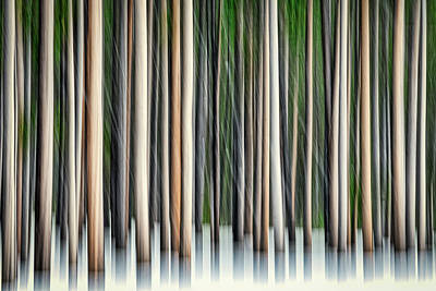 Photograph - Forest Abstract #2 - Yellowstone by Stuart Litoff