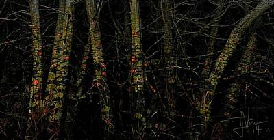 Photograph - Forest Abstract by Jim Vance