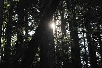 Photograph - Forest Afternoon View Tree Silhouettes by Matt Harang
