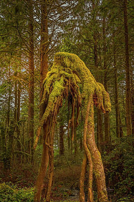 Photograph - Forest Alien by Bill Posner