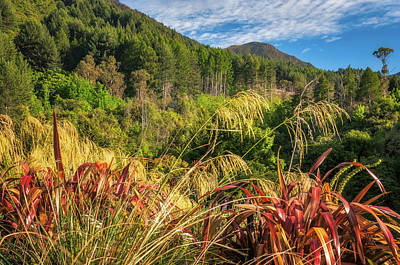 Photograph - Forest And Mountain Range At Wilson Bay, Nz. by Daniela Constantinescu