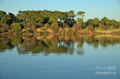 Spring Photograph - Forest And Reflections by Angelo DeVal