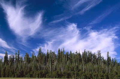 Golden Trout Photograph - Forest And Sky - Big Dry Meadow by Soli Deo Gloria Wilderness And Wildlife Photography