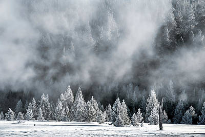Photograph - Forest And Thermal Steam - Yellowstone by Stuart Litoff