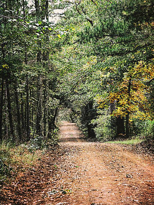 Photograph - Forest Back Road by Charles McKelroy