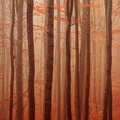 Forest Barcode Art Print by Evgeni Dinev