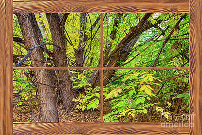 Photograph - Forest Barn Wood Picture Window Frame View by James BO Insogna