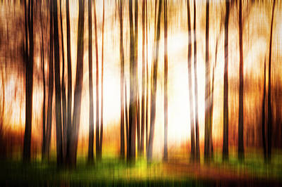 Photograph - Forest Beauty Dreamscape by Debra and Dave Vanderlaan