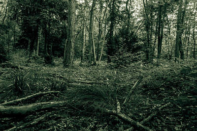 Photograph - Forest Black And White Photography by Jacek Wojnarowski