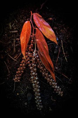 Photograph - Forest Botanicals by Debra and Dave Vanderlaan