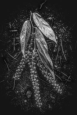 Photograph - Forest Botanicals In Black And White by Debra and Dave Vanderlaan