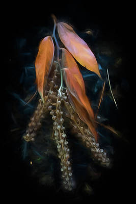 Photograph - Forest Botanicals Watercolors by Debra and Dave Vanderlaan