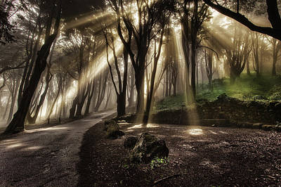 Photograph - Forest Breath by Jorge Maia