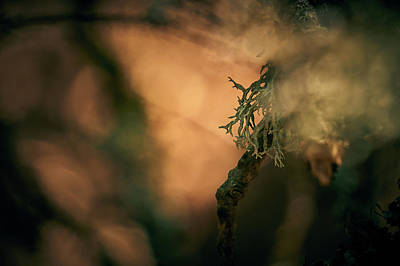 Photograph - Forest Burn by Andreas Gerden