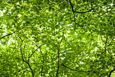 Photograph - Forest Canopy by Chris Deeney
