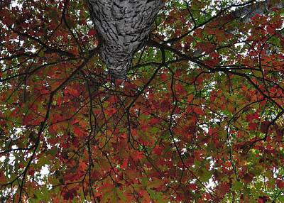 Forest Canopy Art Print by JAMART Photography