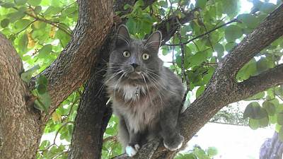 Fuzzy Digital Art - Forest Cat Of The Midwest by Scott D Van Osdol