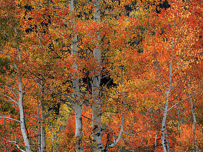 Photograph - Forest Color And Light by Leland D Howard