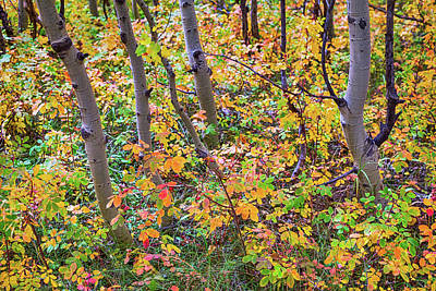 Photograph - Forest Colors by James BO Insogna