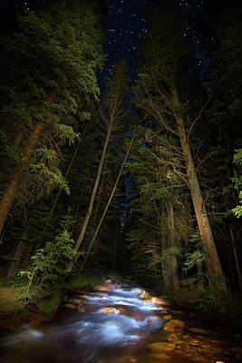 Photograph - Forest Creek by Mark Andrew Thomas