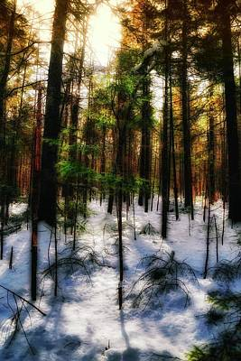 Photograph - Forest Dawn by John Meader