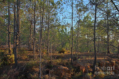 Autumn Photograph - Forest During Sunset by Angelo DeVal