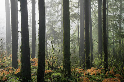 Photograph - Forest Edge by Adam Gibbs