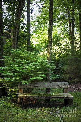 Photograph - Forest Environment by Richard J Thompson