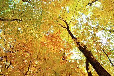Photograph - Forest Fall Yellow  by Lyle Crump