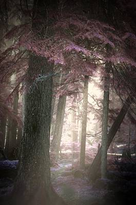 Photograph - Forest Fantasies by Tara Turner