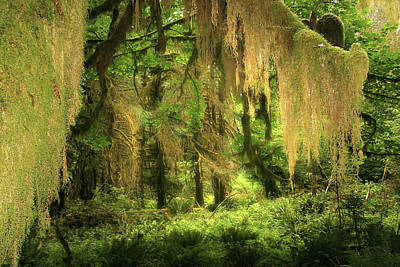 Curtains Photograph - Forest Fantasy - Quinault - Gateway To Paradise On The Olympic Peninsula Wa by Christine Till