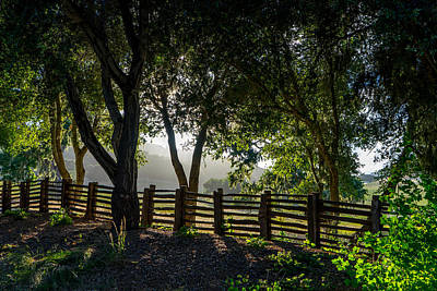 Photograph - Forest Fence by Derek Dean
