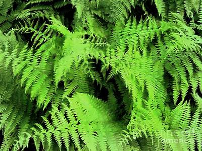 Photograph - Forest Ferns 3  by Janine Riley