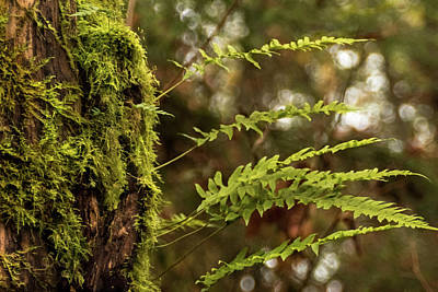 Photograph - Forest Ferns by Crystal Hoeveler