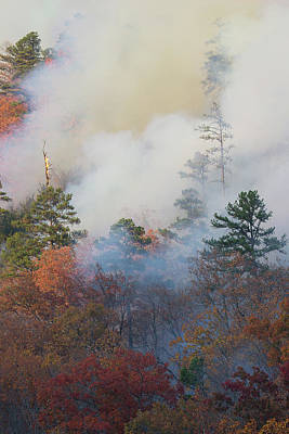Photograph - Forest Fire 2 by Mike Eingle