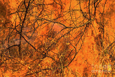 Photograph - Forest Fire by Benny Marty