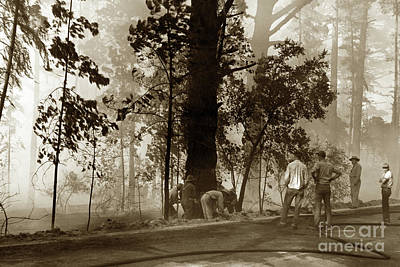 Photograph - Forest Fire Crew In Pine Forest  Pebble Beach Sept. 7 1949 by California Views Archives Mr Pat Hathaway Archives