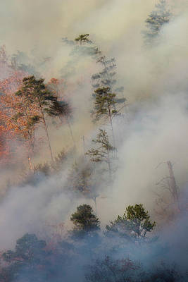 Photograph - Forest Fire by Mike Eingle