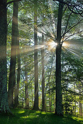Photograph - Forest First Light by Alan Lenk