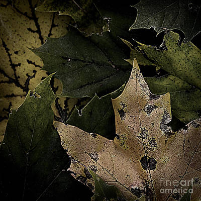 Photograph - Forest Floor - Leaf 1 by Pete Hellmann