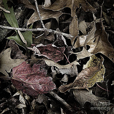 Photograph - Forest Floor - Leaf 10 by Pete Hellmann