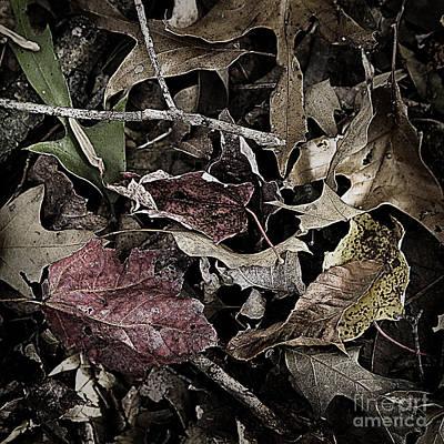 Forest Floor - Leaf 10 Art Print by Pete Hellmann