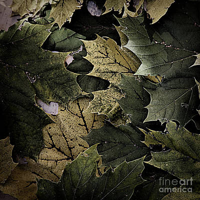 Photograph - Forest Floor - Leaf 12 by Pete Hellmann