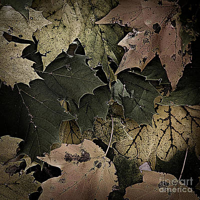 Photograph - Forest Floor - Leaf 14 by Pete Hellmann