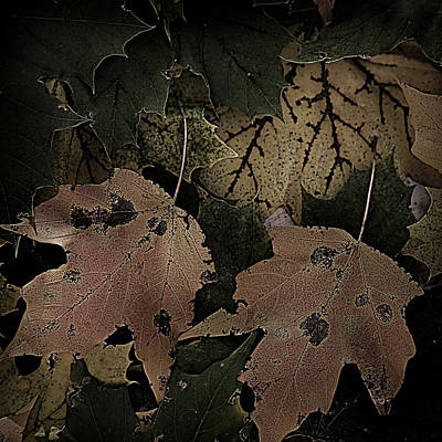Photograph - Forest Floor - Leaf 15 by Pete Hellmann