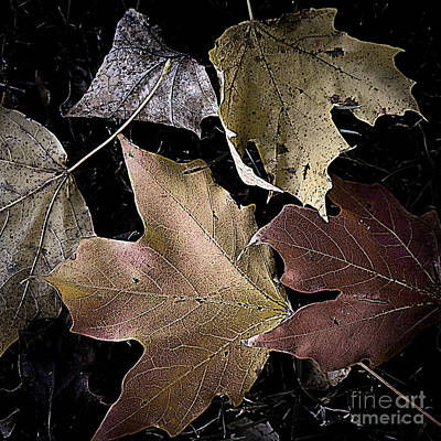 Photograph - Forest Floor - Leaf 2 by Pete Hellmann