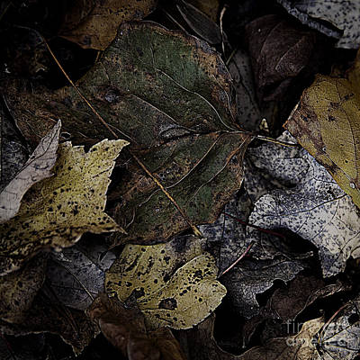 Photograph - Forest Floor - Leaf 7 by Pete Hellmann