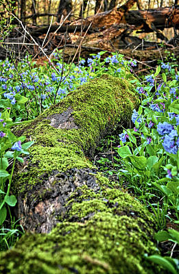 Photograph - Forest Floor 2 by Bonfire Photography