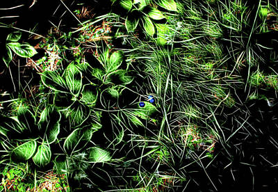 Digital Art - Forest Floor by Aliceann Carlton