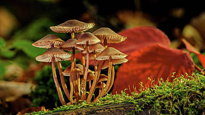Photograph - Forest Floor Beauty by Pixabay